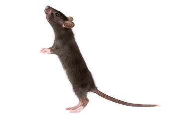 Rodent Control In Ga Ideal Pest Control